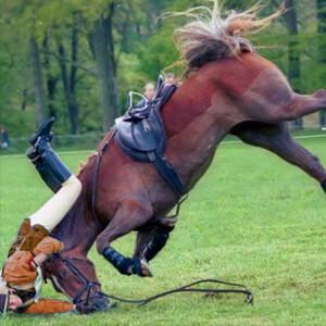 Horse Insurance - Care Advice