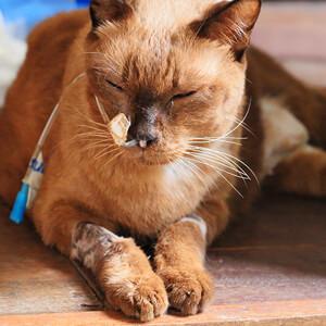 Cat ill - Care Advice