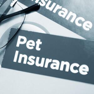 Pet Insurance - Care Advice