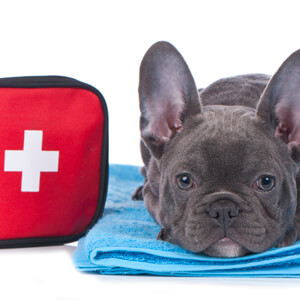 Dog First Aid - Care Advice