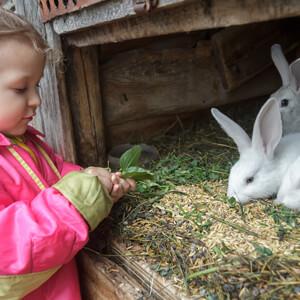 Rabbit Care - Care Advice