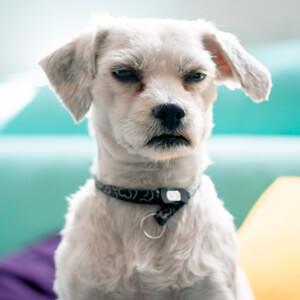 Dog Behaviour - Care Advice