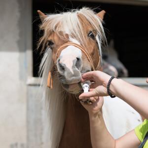 Equine Care - Care Advice