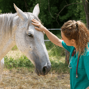Horse Healthcare - Care Advice