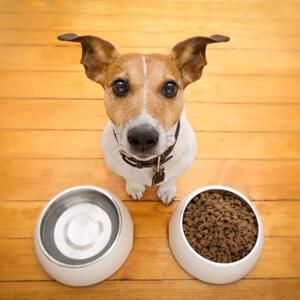 Feeding my dog - Care Advice