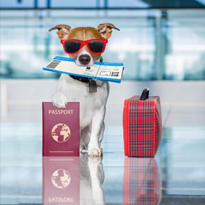 Pet Travel - Care Advice