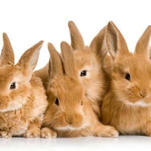 Rabbits - Care Advice