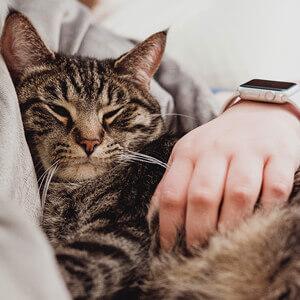 socialising your cat - Care Advice