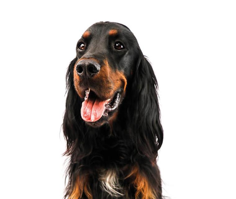 Pet Hero - News Image