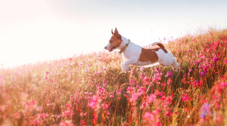 Pet Hay Fever